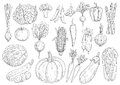 Vegetables Vector Sketch Isolated Icons Royalty Free Stock Images - 84760279