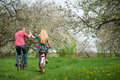 Loving Young Couple Riding Bicycles In The Spring Garden Stock Images - 84796334