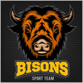 Buffalo Head With Horns. Logo For Any Sport Team Bison Royalty Free Stock Photos - 84871758