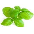 Leaves Of Basil Isolated On White Background Royalty Free Stock Photo - 84894805