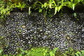 Texture Of Old Stone Wall Covered Green Moss In Indonesia Stock Photo - 84910520