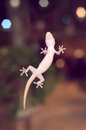 A Little Lizard On The Mirror Wall Stock Image - 84929121