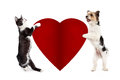 Cat And Dog Holding Blank Valentine Heart Stock Photo - 84943190