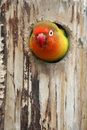 Parrot Royalty Free Stock Image - 855056