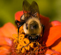 Bee On Flower Royalty Free Stock Photo - 8502235