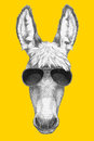 Portrait Of Donkey With Sunglasses. Stock Photography - 85025432