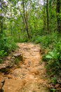 Jungle Trail Royalty Free Stock Image - 85076406