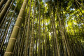Bamboo Garden In Kamakura Japan Stock Photo - 85095530