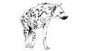 Hyena Drawn In Ink By Hand Royalty Free Stock Image - 85139406