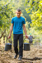 Teenage Boy Carrying Buckets Of Plums Royalty Free Stock Photo - 85223165