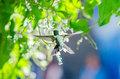 Hummingbird Flying Next To Some Flowers Royalty Free Stock Image - 85268386