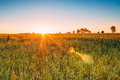 Sunset Sunrise Over Wheat Field. Sun Shine Over Green Meadow Stock Photography - 85288562