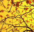 Leaves Royalty Free Stock Image - 8535176