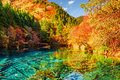 The Five Flower Lake Multicolored Lake Among Autumn Forest Royalty Free Stock Photos - 85348048