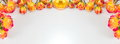 Red And Yellow Roses Wide Banner Royalty Free Stock Photo - 85384235