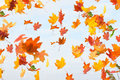 Autumn Leaves Are Falling. Royalty Free Stock Photo - 85398515