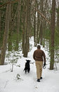 Dog Walk Through Forest Royalty Free Stock Image - 8549196