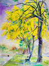 Painting  Landscape Colorful Of Golden Tree Flowers In Park Street. Royalty Free Stock Images - 85405919