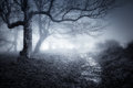 Path In Dark And Scary Forest Royalty Free Stock Images - 85412349