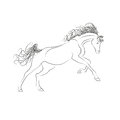Vector Outline Drawing Horses. The Horse Gallops, Mane And Tail Fluttering. Royalty Free Stock Image - 85438446
