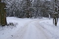 Forest Crossroads Winter. Stock Image - 85561271