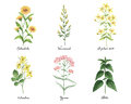 Watercolor Hand Painted Set With Medical Herbs And Plants. Stock Images - 85600794