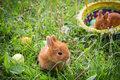 Two Bunnies On Green Meadow With Colorful Easter Eggs Royalty Free Stock Image - 85727026