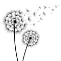 Two Flowers Dandelions Silhouette Stock Photos - 85872813