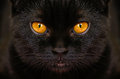 Close-up Serious Black Cat With Yellow Eyes In Dark. Face Black Royalty Free Stock Photography - 85970387