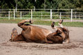 Chestnut Horse Rolling In The Sand Stock Photography - 85978982
