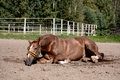 Chestnut Horse Rolling In The Sand Royalty Free Stock Image - 85979036