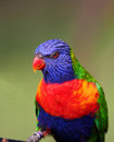 Colorful Bird Stock Photo - 866270