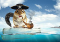 Funny Drifting Animal Pirate, Chipmunk With Filibuster Hat Royalty Free Stock Image - 86070686