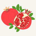 Hand Drawn Pomegranates In One Piece And Sliced In Half Royalty Free Stock Photos - 86084088
