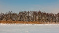 Winter Landscape. Reed And Trees. Coast Of The Snow Lake Royalty Free Stock Photography - 86145217