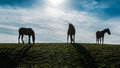 Three Horses In The Meadow Royalty Free Stock Photo - 86195095