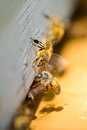 Bees Going Out Frame Royalty Free Stock Photo - 86208125