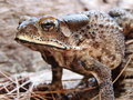 Toad Stock Images - 86269404