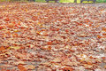 Yellow, Orange And Red Autumn Leaves In Beautiful Fall Park Stock Images - 86330634