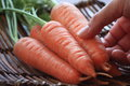 Carrot With The Leaf Stock Images - 86355854