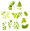 Leaves Isolated On White Stock Photos - 8646763