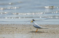 Bird On Beach. Royalty Free Stock Images - 86403219