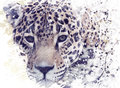 Leopard Portrait Watercolor Royalty Free Stock Photography - 86417777