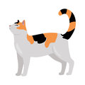 Calico Cat Vector Flat Design Illustration Royalty Free Stock Photography - 86441517