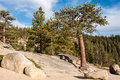 Tree On A Rock Taft Point In Yosemite National Park, California, USA Royalty Free Stock Image - 86457456