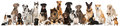 Group Of Breed Dogs Stock Photos - 86471073