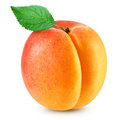 Apricot Fruits Isolated Royalty Free Stock Images - 86501139