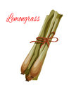 Lemongrass Herb Spice Flavoring Vector Icon Stock Photo - 86559020