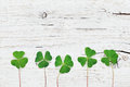 Saint Patricks Day Background With Green Shamrock On White Rustic Texture Top View. Stock Image - 86572841