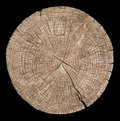 Cross Section Of Tree Trunk Royalty Free Stock Photography - 86574447